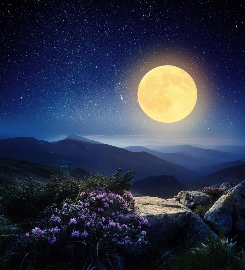 რომელ დღეებში უნდა დათესოთ, რომ უხვი მოსავალი მიიღოთ? რჩევები მთვარის კალენდრის მიხედვით.